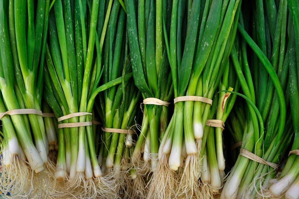 onion supplier, onion suppliers, onion suppliers in iran, iranian onion, iran onion supplier, onion for sale, bulk oniono for sale, onions wholesalers